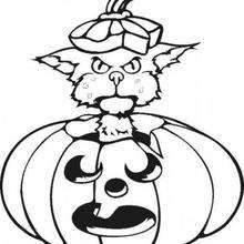 قطّ يلعب بيقطينة هالويين