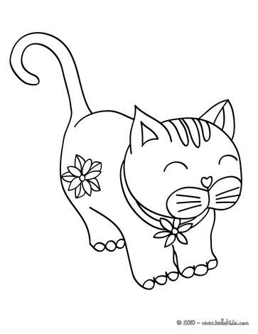 Cat5 Colors