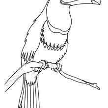 تلوين على الإنترنت طائر طوقان