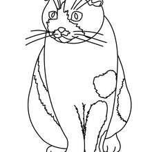 تلوين رسم قطّ