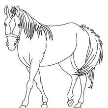 تلوين على الإنترنت رسم حصان