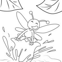 نحلة على زهرة الزنبق