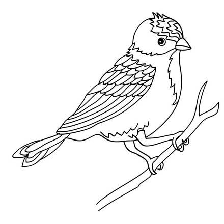 birds 26 01 n6d source تلوين اجمل صور الكنارى للاطفال