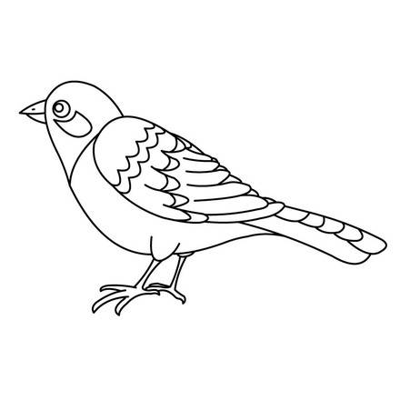 birds 4 01 nwb source تلوين اجمل صور الكنارى للاطفال